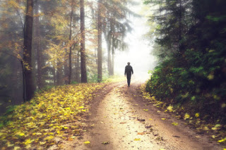 Contact with nature lowers stress hormone levels, new study finds